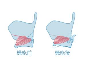 輪状甲状筋の働き