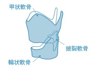 喉頭軟骨郡