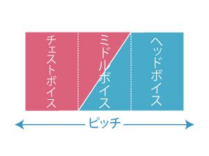 チェスト/ミドル/ヘッド