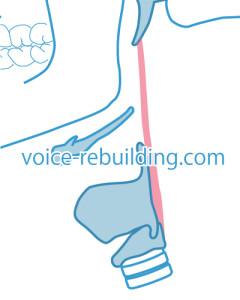 茎突咽頭筋