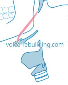 茎突舌骨筋