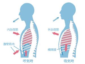 発声練習時の呼吸について | ボ...