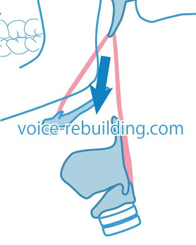 茎突舌骨筋・茎突咽頭筋マッサージ方向
