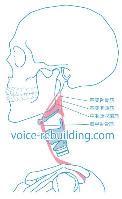 喉頭の埋まり込み原因筋